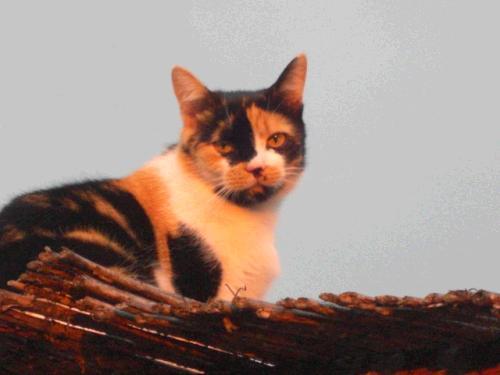 Homöopathie für Katzen für gesunde Haut und ein schönes Fell