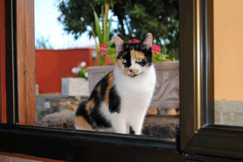 gesunde Ernährung für Katzen, gesunde Katzenernährung, Katze barfen