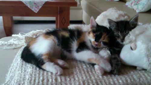 Bonny und Sunny als Katzenbabys