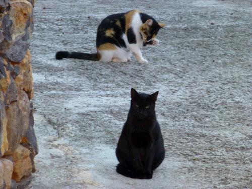 Katzenpsychologie Katzenpsychologin ganzheitlich