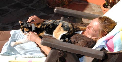 Bachblüten und Homöopathie für aggressive Katzen