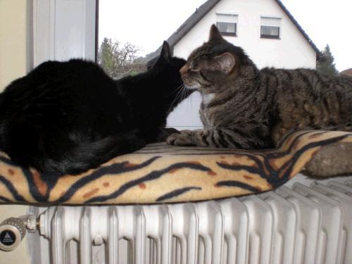 Katze Mila mit Kater Sandy