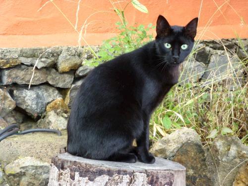 Homöopathie und Bachblüten für die unsaubere Katze