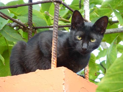 Homöopathie für Katzen mit Epilepsie