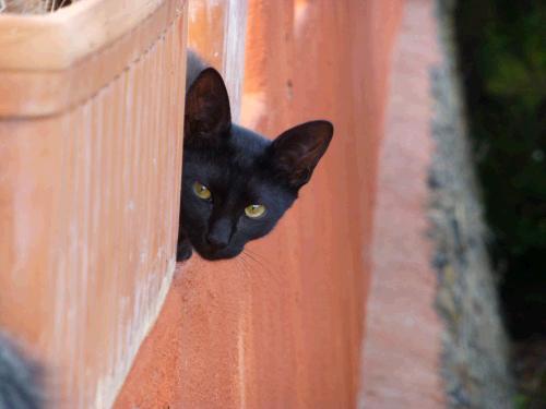 Katzenpsychologie Katzenpsychologin
