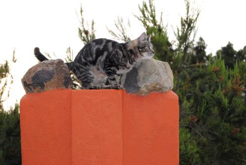 homöopathische Nosoden für Katzen