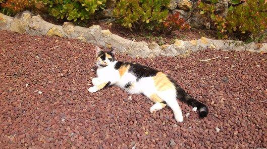 Bachblüten Notfalltropfen Notfallglobuli Katze Rescue Remedy