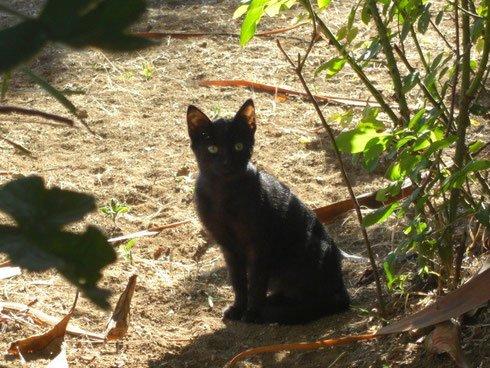 schwarzes Katzenkind