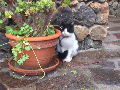 Homöopathische Mittel können Harngrieß, Struvit, Kristalle der Katze ausleiten