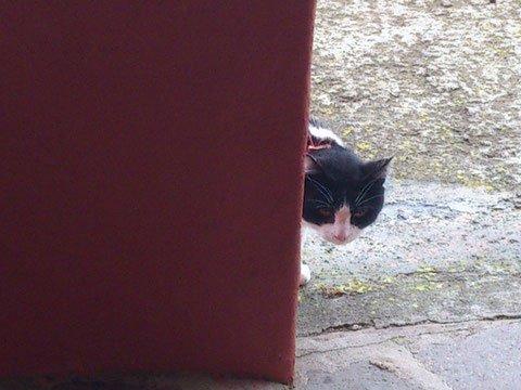 Katze schaut um die Ecke