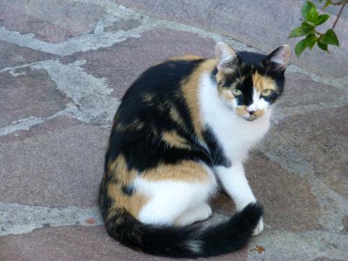 Homöopathie für Katzen mit Erbrechen