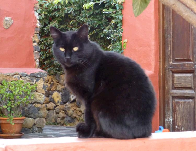 homöopathische Katzenberatung - Homöopathie für Katzen