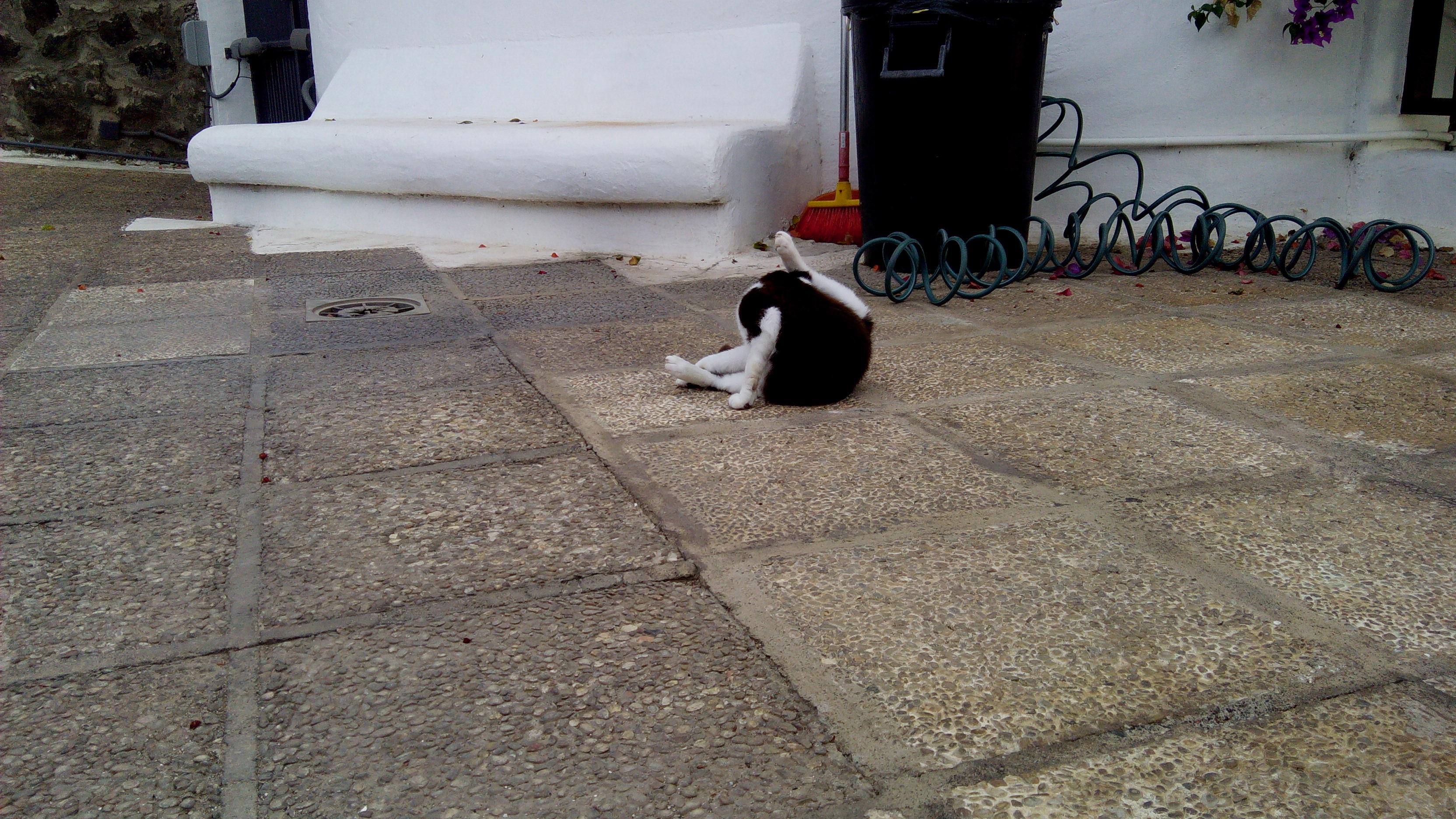 eine Nacht lang war Kitty draußen unterwegs...