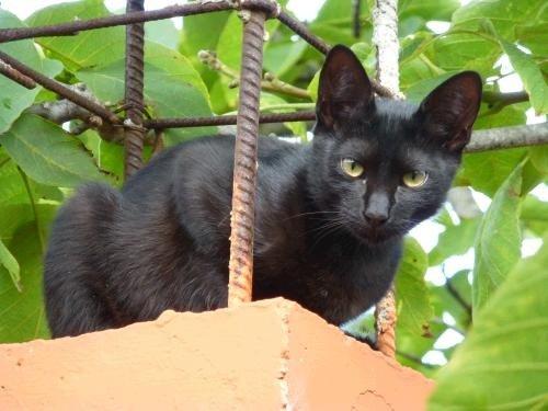 Verhaltensauffälligkeiten der Katze gezielt, sanft und ganzheitlich beheben
