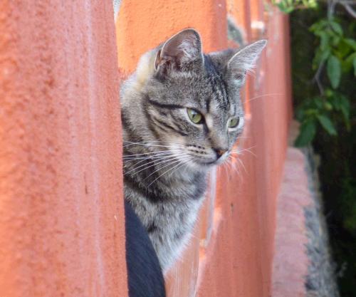 klassische Homöopathie für Katzen