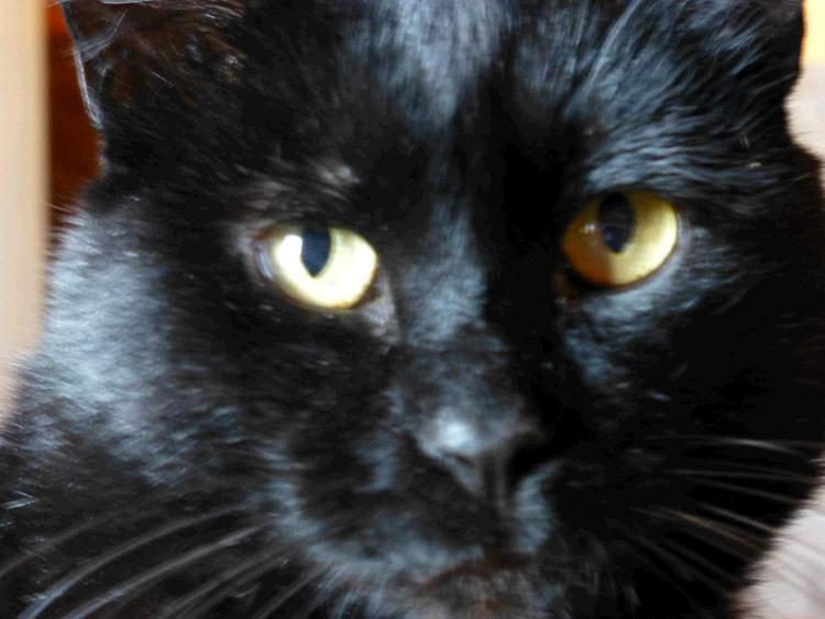 Ganzheitliche Homöopathie für kranke Katzen