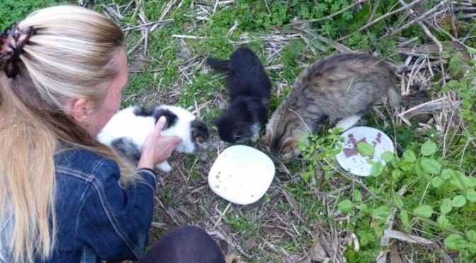 8 Katzenbabys – und nun?