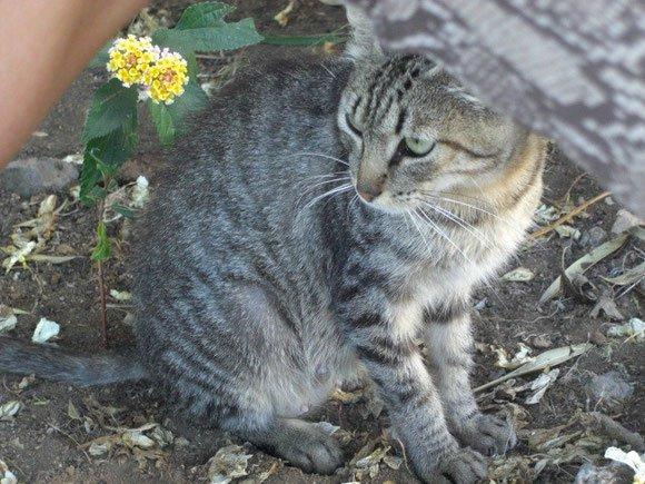 Globuli bei Leberproblemen der Katze, Homöopathie