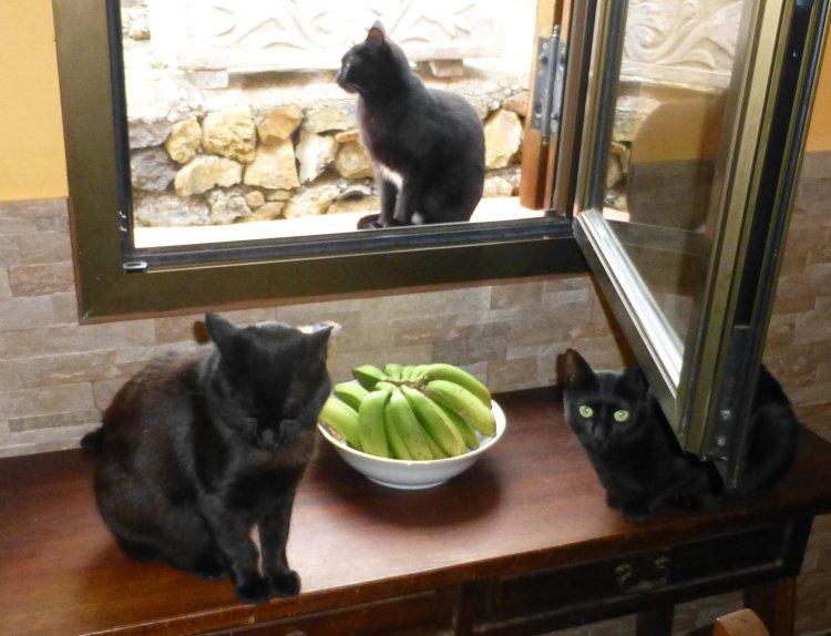 Luna, Piña und Cato