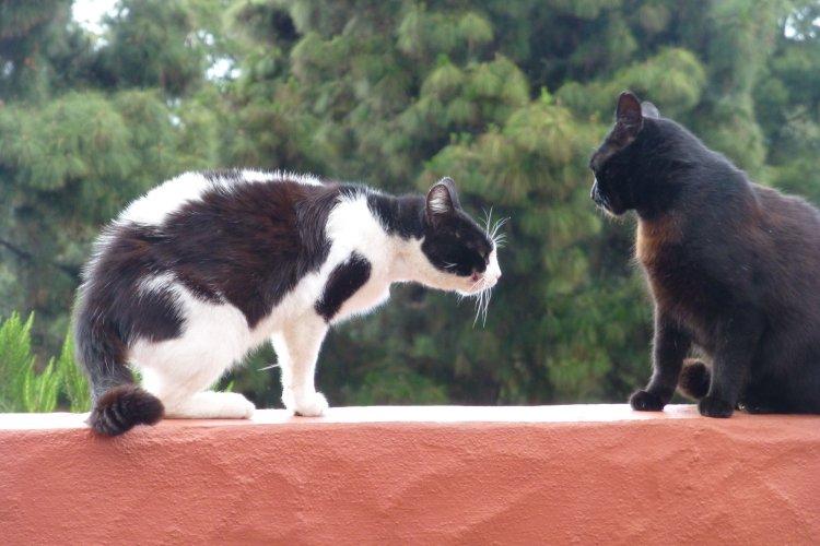 Maske und Cato