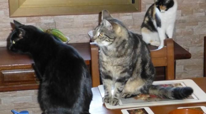 Alle Katzenfreunde hier haben mehrere Katzen…